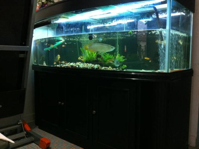 aquarium for sale singapore fish tank and cabinet for sale adoption in singapore adpost