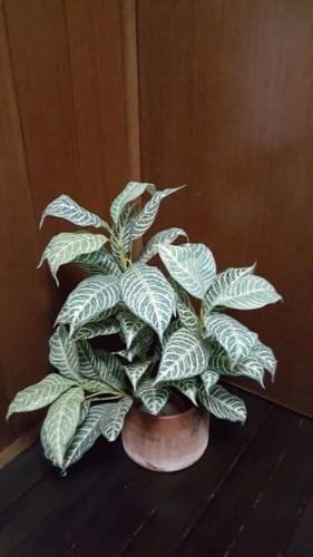 Artificial Green Bush Leaf Plant Pot 2
