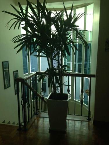 Indoor and outdoor Plants for sale