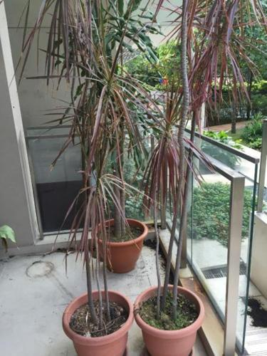 Large assorted outdoor potted plants