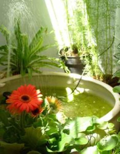Diy fish pond for Garden pond quotes