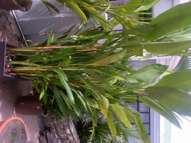 Palms and Plants for Sale