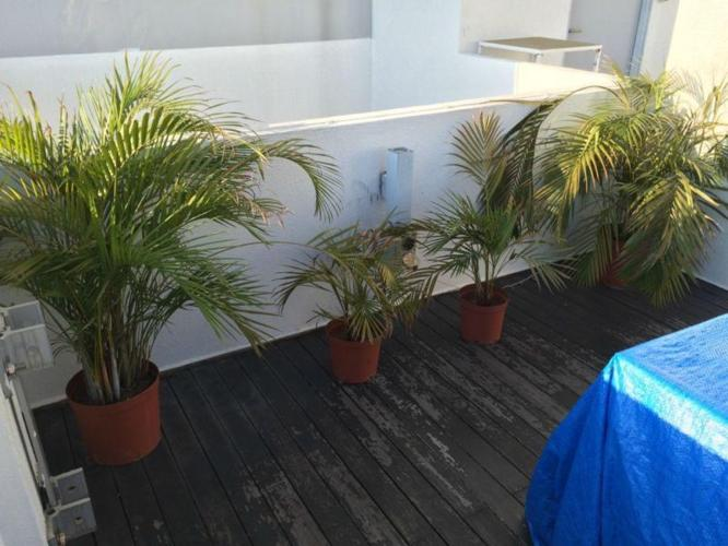 Set of 4 Ferns *GIVE YOUR OUTDOOR AREA CHARACTER*