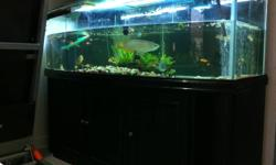 Hi all, I have a fish tank Size 6ft x 2ft x 2ft (curve tank). comes with cabinet, top cover, 2 different light system, 2 water pump on top and 1 pump at Bio filter (total 3 pump) and 1 air pump,fresh water plants, stones etc --- Selling @ 488 (Not