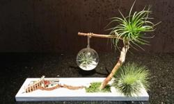 This table top garden display uses air plants as the