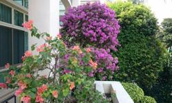 We are selling a beautiful Bonsai-shaped Bougainvillea
