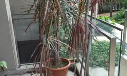 I have quite a few large potted plants-and more that