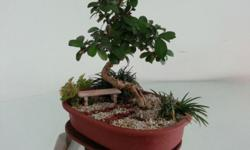 A miniature world with a bonsai tree in the centre