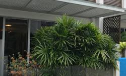 Large patio/ balcony plants perfect for privacy - paid