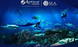 SEA Aquarium World Largest Oceanarium Call Ricky