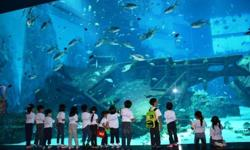 SEA Aquarium World Largest Oceanarium Call John