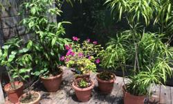 Various potted plants see photos. Buyer to collect -